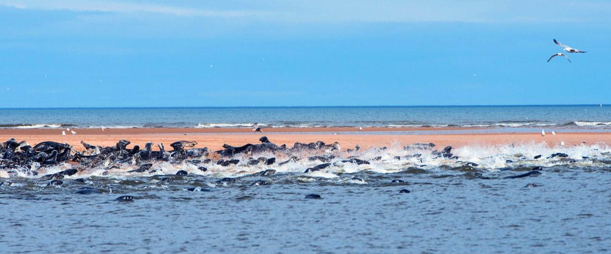 Seals and seabirds on the Moray Coast.